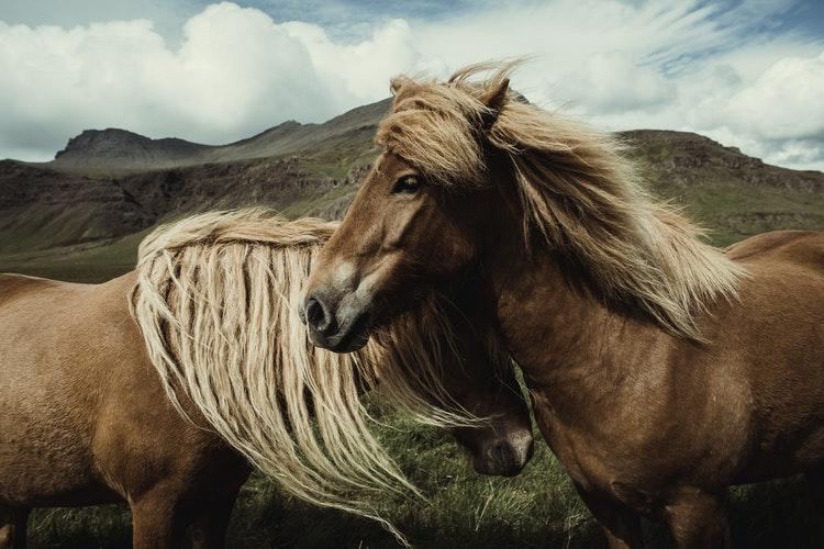 Equithérapie : à la rencontre du cheval